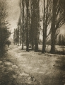 Trees: A Pictorialist Perspective